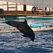 Dolphin Show - National Aquarium In Baltimore Md - 1212215 Art Print
