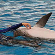 Dolphin Show - National Aquarium In Baltimore Md - 1212231 Print by DC Photographer