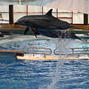 Dolphin Show - National Aquarium In Baltimore Md - 1212249 Art Print