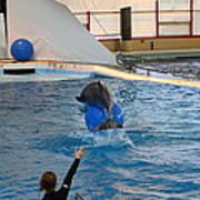 Dolphin Show - National Aquarium In Baltimore Md - 121240 Print by DC Photographer