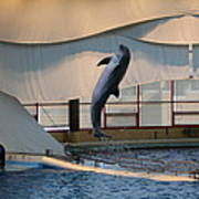 Dolphin Show - National Aquarium In Baltimore Md - 121255 Art Print by DC Photographer