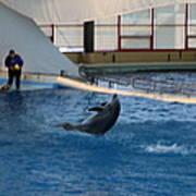 Dolphin Show - National Aquarium In Baltimore Md - 121258 Art Print by DC Photographer