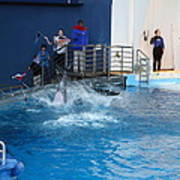 Dolphin Show - National Aquarium In Baltimore Md - 121292 Art Print