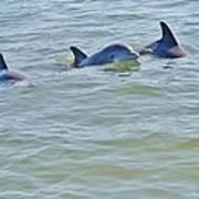 Dolphins 2 Art Print