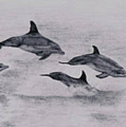 Dolphins Art Print by Lucy D