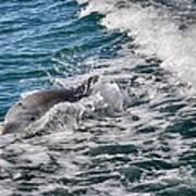 Dolphins Smile Art Print