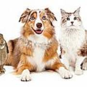 Domestic Pet Composite Art Print