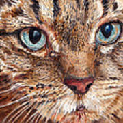 Domestic Tabby Cat Art Print