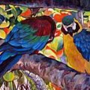 Dominican Birds Art Print