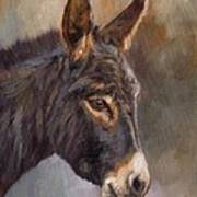 Donkey Art Print By David Stribbling
