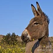 Donkey In Greece Art Print