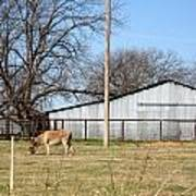 Donkey Lebanon In Oklahoma Art Print