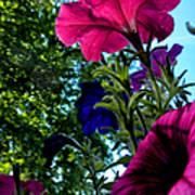 Donna's Blooming Petunias Art Print