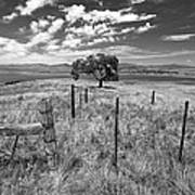 Don't Fence Me In - Black And White Art Print