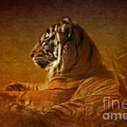 Don't Wake A Sleeping Tiger Art Print