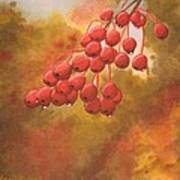 Door County Cherries Art Print