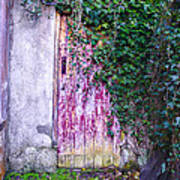Door Covered In Ivy Art Print