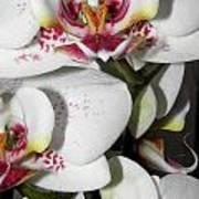 Dots And Splashes Of Pink On Orchid Art Print by Kim Galluzzo Wozniak