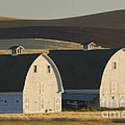 Double Barns Art Print