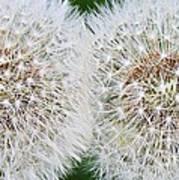 Double Dandelion Wishes Art Print