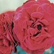 Double Desert  Red Roses Art Print
