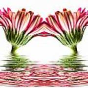 Double Pink Gerbera Flood Art Print