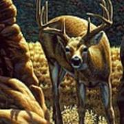 Whitetail Buck - Double Take Art Print by Crista Forest