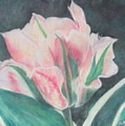 Double Tulip Art Print by Cathy Lindsey