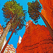 Douglas Firs On Wall Street On Navajo Trail In Bryce Canyon National Park-utah Art Print