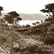 Douglas School For Girls At Lone Cypress Tree Pebble Beach 1932 Art Print