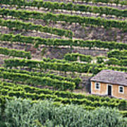 Douro Valley Vineyards Art Print