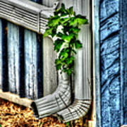 Downspout Print by Doc Braham