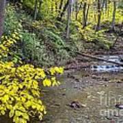 Downstream Blue Hen Falls Art Print