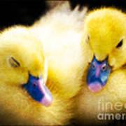 Downy Ducklings Art Print