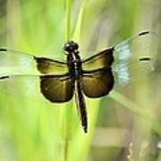 Dragonfly 9249 Art Print