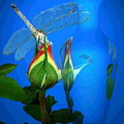 Dragonfly And Bud On Blue Art Print