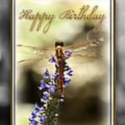 Dragonfly Birthday Card Art Print by Carolyn Marshall