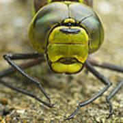 Dragonfly Close-up Art Print
