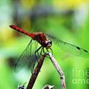 Dragonfly Hard At Work Art Print