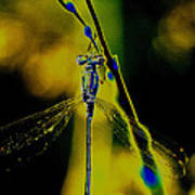 Dragonfly In The Sun Art Print