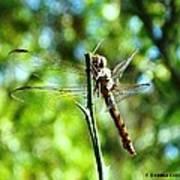 Dragonfly Magic Art Print