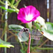 Dragonfly On Watch Art Print by Walter Klockers