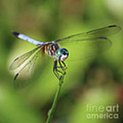 Dragonfly Square Art Print