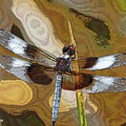 Dragonfly Waiting For A Fly Art Print