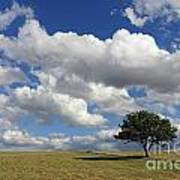 Dramatic Clouds And The Tree Art Print