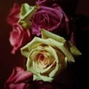 Dramatic Purple And Yellow Roses Art Print