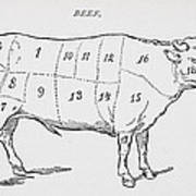 Drawing Of A Bullock Marked To Show Eighteen Different Cuts Of Meat Print by English School