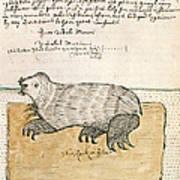 Drawing Of A Seal Art Print