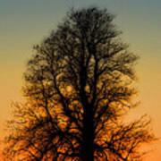 Dream Tree At Sunset Art Print
