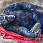Dreaming Of Bananas Chimpanzee Art Print